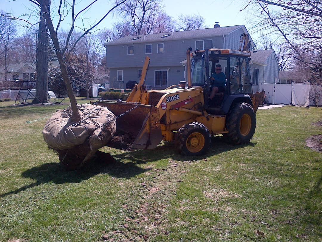 Removing and Planting a Large Tree in Whippany