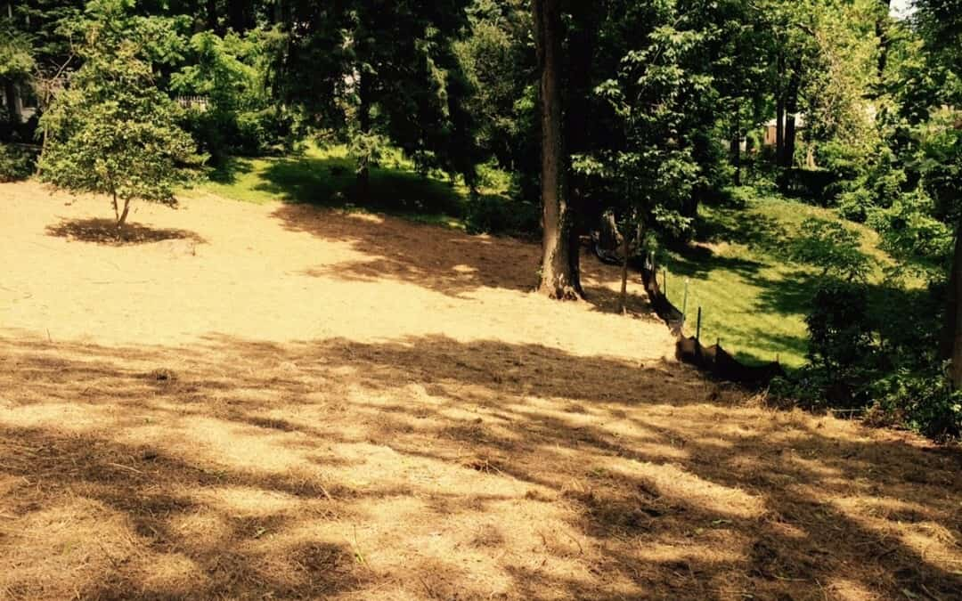 Backyard clearing & clean up in Gillette New Jersey